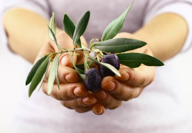 Manos sosteniendo un ramo de olivo hacia la cámara - 10 Beneficios del aceite de oliva