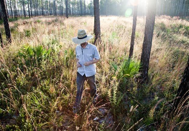Un hombre camina a través de la alta hierba de un parque - Combatir la depresion sin medicamentos