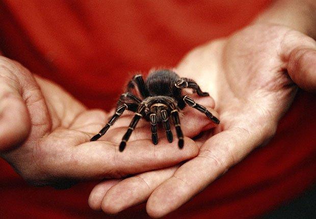 Manos sosteniendo una araña - Aracnofobia - Fobias comunes