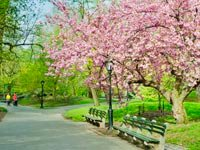 Spring trees and park bench, Spring allergies