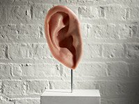 Bouton mid life hearing loss invisible disability ear art sculpture white wall pedestal shouting won't help written widespread phenomenon experts