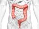 Diagrama del sistema digestivo - Síntomas, tratamiento, diagnóstico del Cáncer de Colon