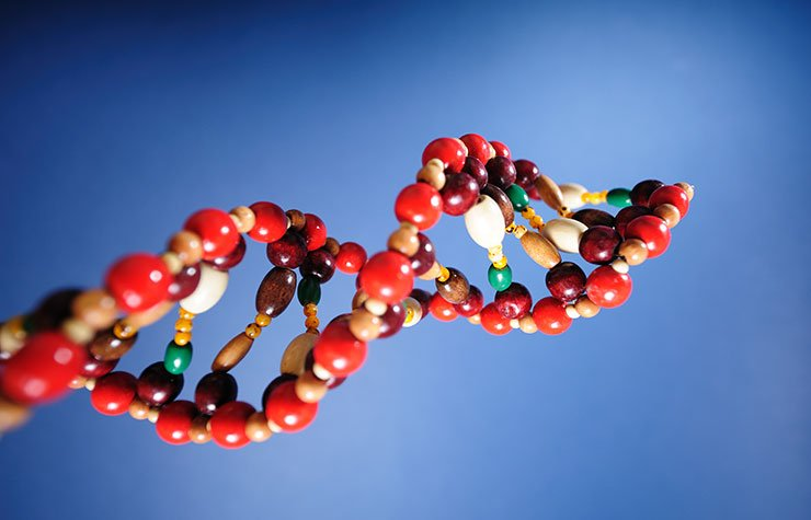 DNA model. The 1959 discovery at University of Pennsylvania of a chromosomal mutation.
