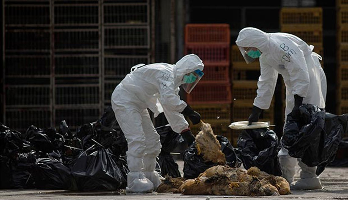 Workers, dead chickens, Cheung Sha Wan, Hong Kong, Avian Flu, Plagues and Epidemics Through the Ages,