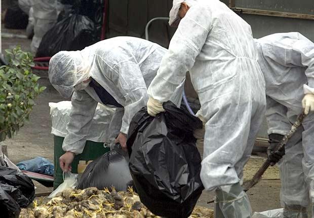 Epidemics 21 Century Bird Flu Chickens Hazmat Suit ESP