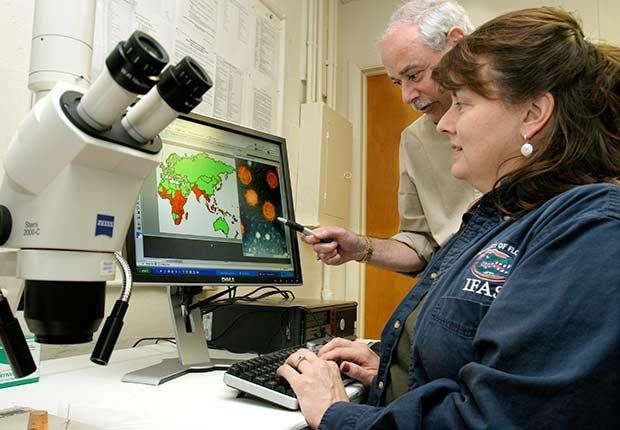 Epidemics 21 Century Chikungunya Microscope Results Disease Scientists Medical ESP