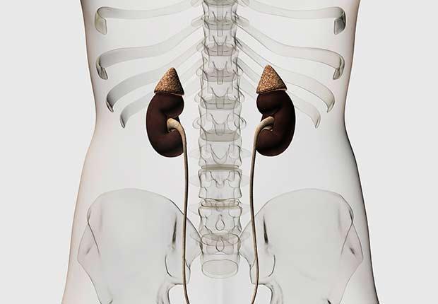 Gráfico de los riñones - Cómo cuidar y mantener tus riñones saludables