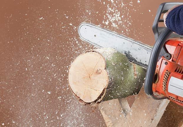 Cortando un tronco