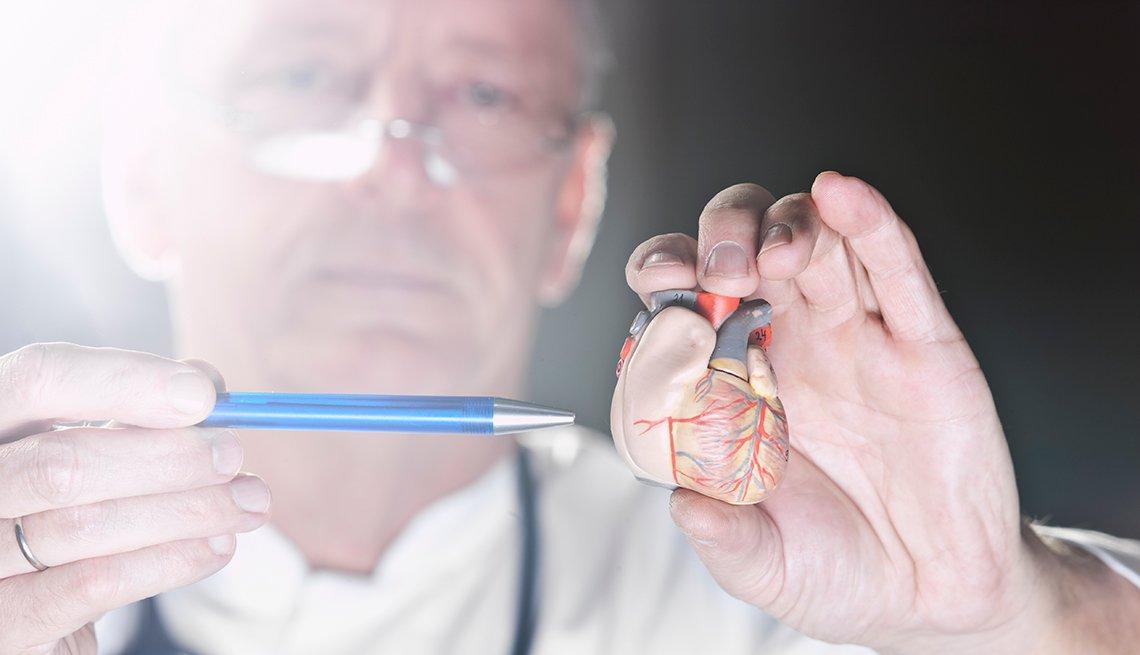 Médico con un modelo a escala del corazón - Problemas circulatorios, cuando ir al médico