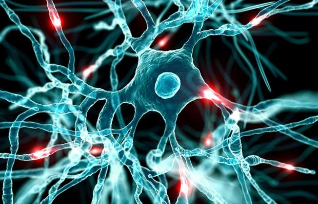Gráfico del sistema nervioso