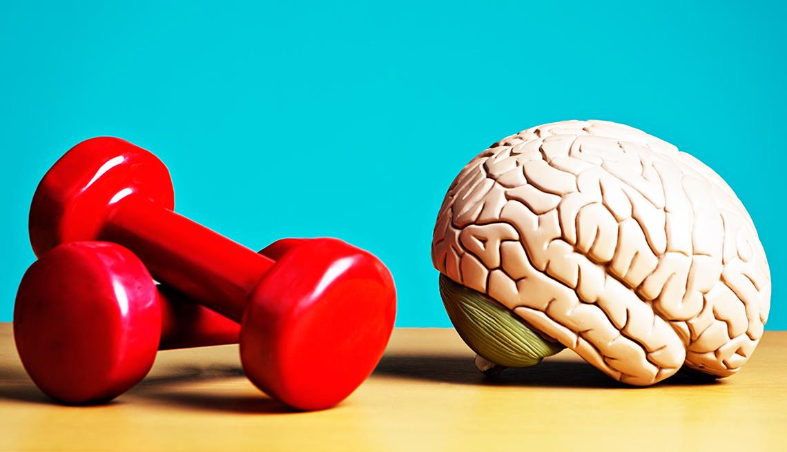 Dumbells and brain model