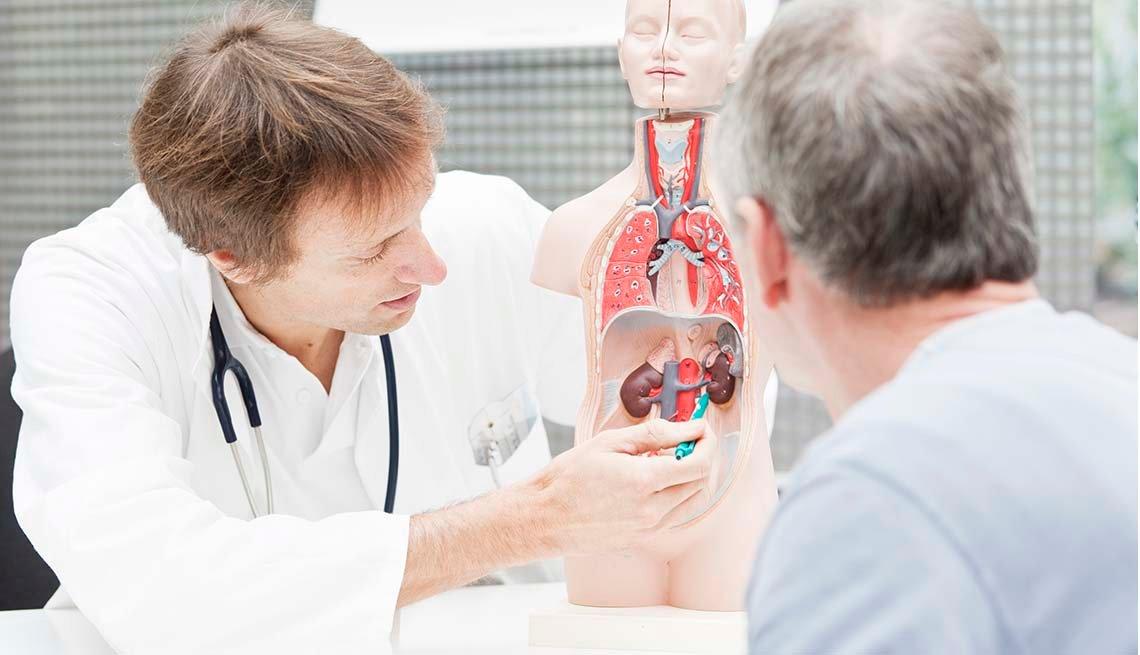 Médico utiliza un modelo anatómico para mostrar los riñones a un paciente mayor