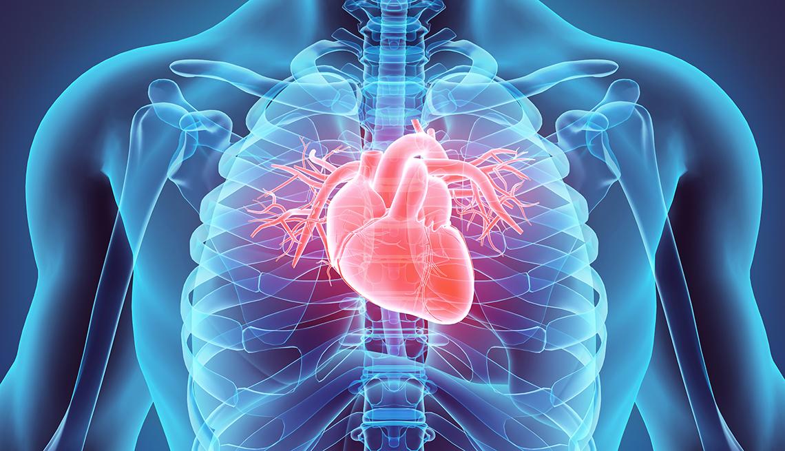 Ilustración de un torso humano donde se destaca el corazón