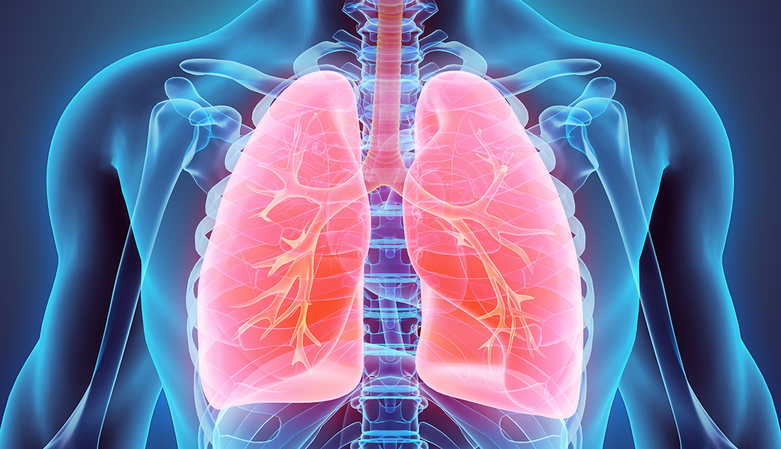 illustration of the human body internal organs with the lungs highlighted