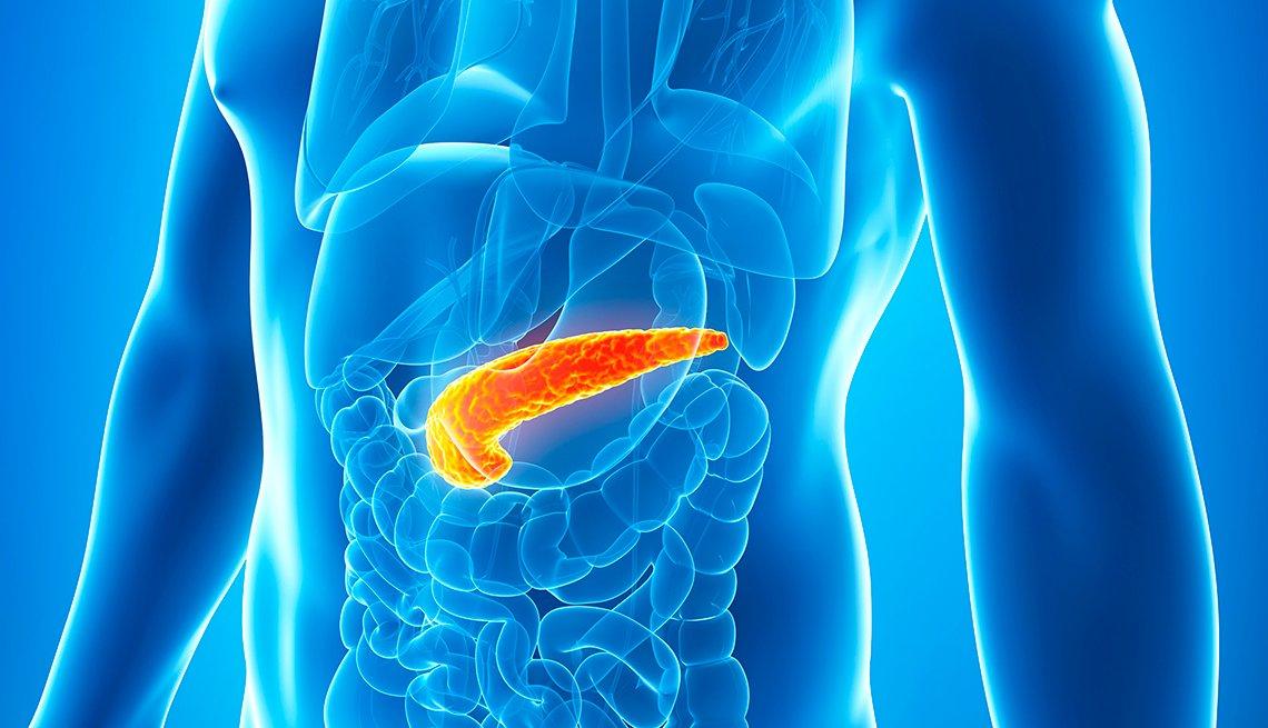 Ilustración del cuerpo humano donde se destaca el pancreas