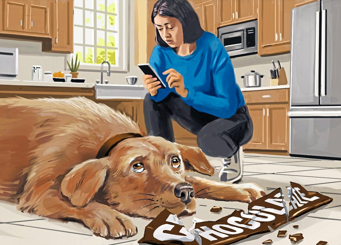 dog lying on floor in front of empty chocolate bar wrapper with owner crouched above calling emergency help