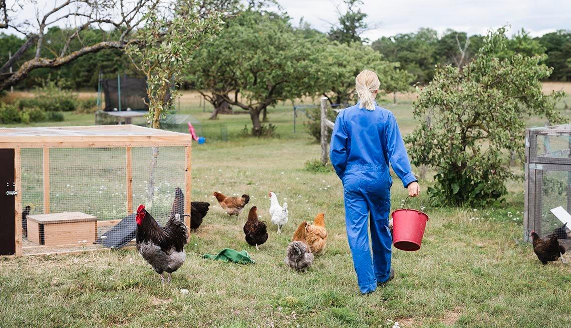 woman feeding chickens in backyard