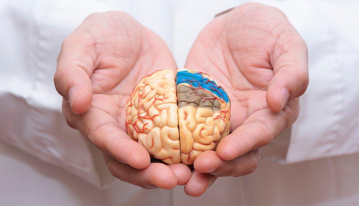 Manos sosteniendo un modelo de un cerebro