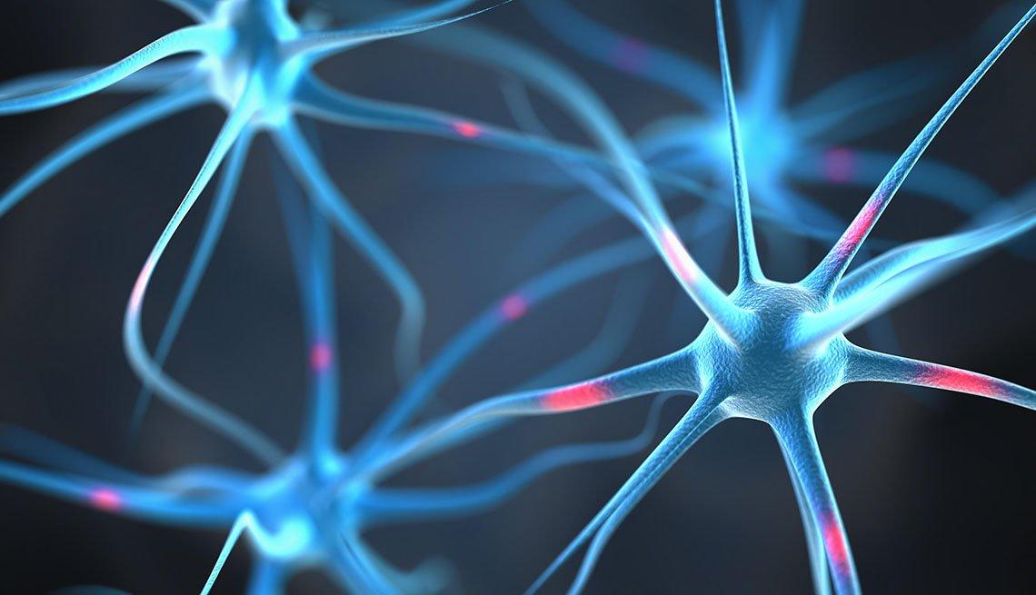Conexión de neuronas en el cerebro