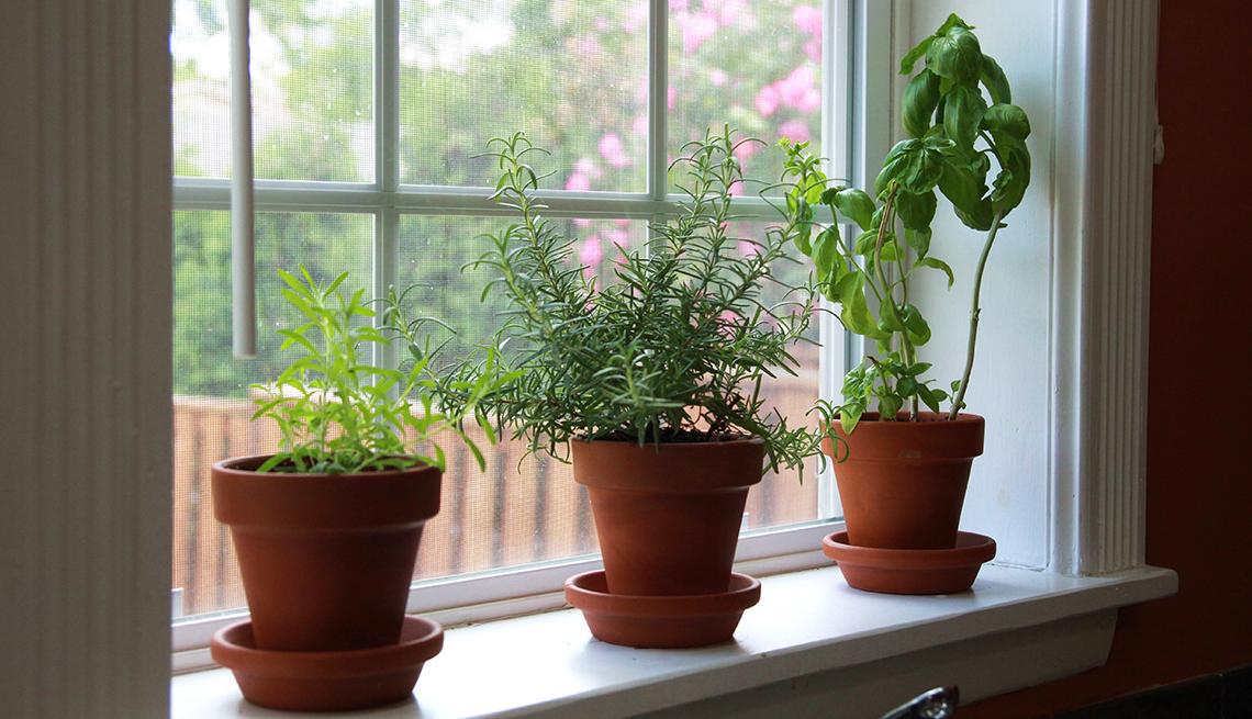 Plantas de especias en una ventana