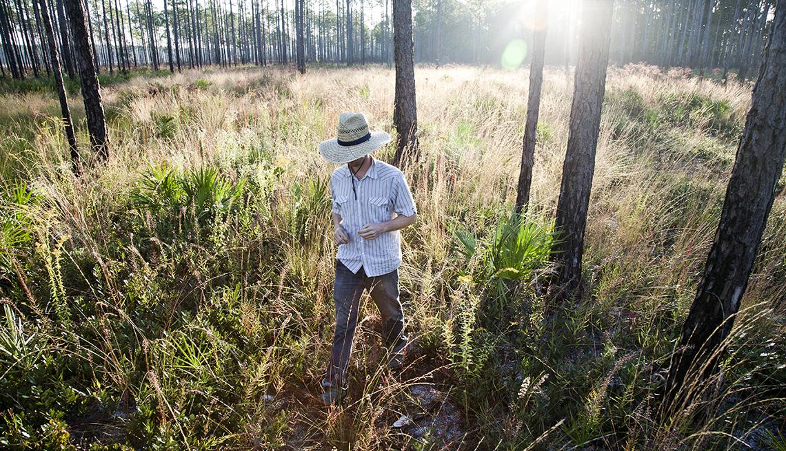 Hombre con sombrero en la cabeza camina por un bosque de pinos.