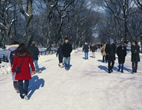 people walking in Central Park in the snow