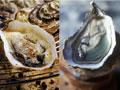 Comida saludable: (izquierda) de ostras a la parrilla, (derecha) de ostras crudas