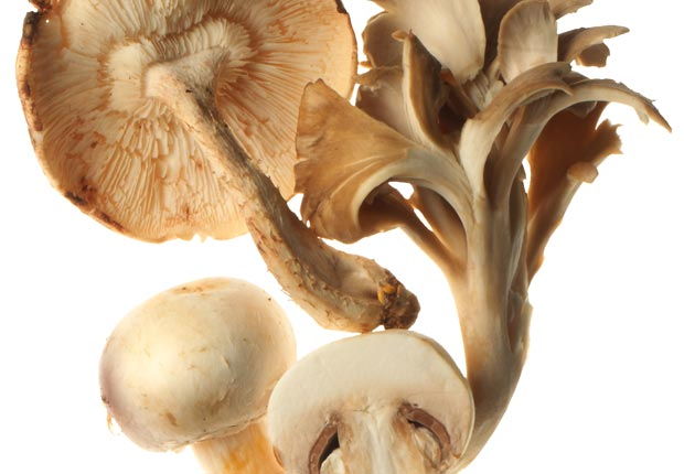 mushrooms; shiitake, maitake, oysters; buttons; health; food