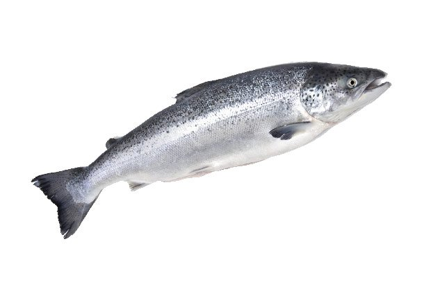 Salmon and other foods that help fight cancer