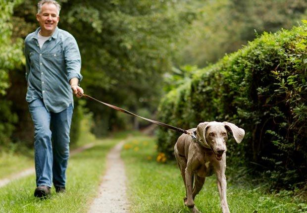 Hombre caminando perro - Dése un cambio para encontrar la felicidad