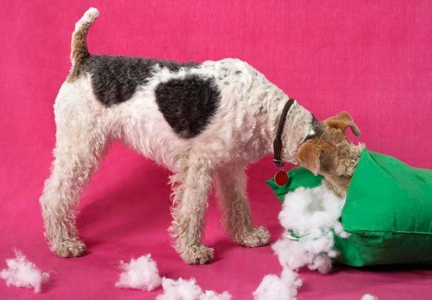 Perro rompiendo una almohada - Cosas que puede botar a la basura - Limpieza de primavera