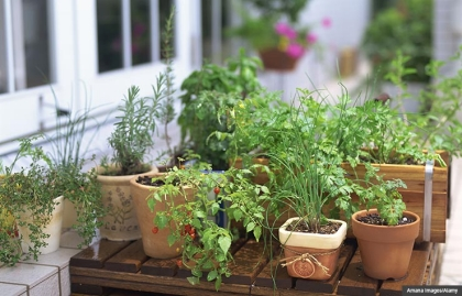 Herb and vegetable garden. Gifts that promote a healthy mind and body. (Amana Images/Alamy)