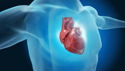 Ilustración del corazón - ¿Qué pasa con nuestro cuerpo cuando nos sentamos durante casi ocho horas al día?