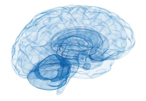 Modelo de alambre Cerebro - ¿Qué pasa con nuestro cuerpo cuando nos sentamos durante casi ocho horas al día?