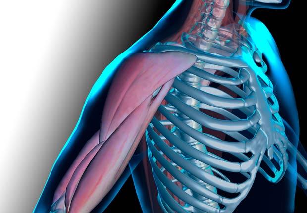 Ilustración del hombro y el brazo - ¿Qué pasa con nuestro cuerpo cuando nos sentamos durante casi ocho horas al día?