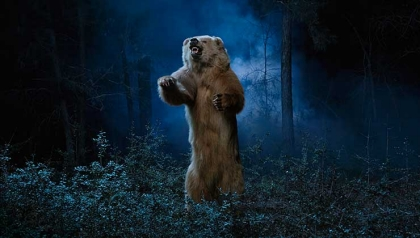 wild animal  survival skills great outdoors bear attack large animal attack wild