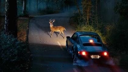 Un venado en carretera a punto de ser atropellado por un carro - Guía de supervivencia