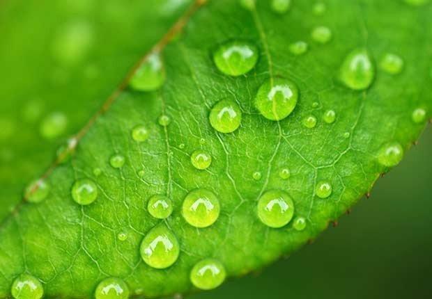 Hoja con gotas de lluvia - 7 razones para tener más sexo después de los 50