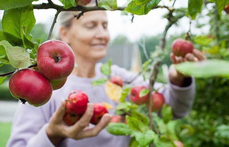 Mujer recogiendo unas manzanas - 9 alimentos que te ayudan a quemar la grasa