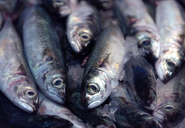 Foods that Fight Prevent Migraine Headache Sardines ESP