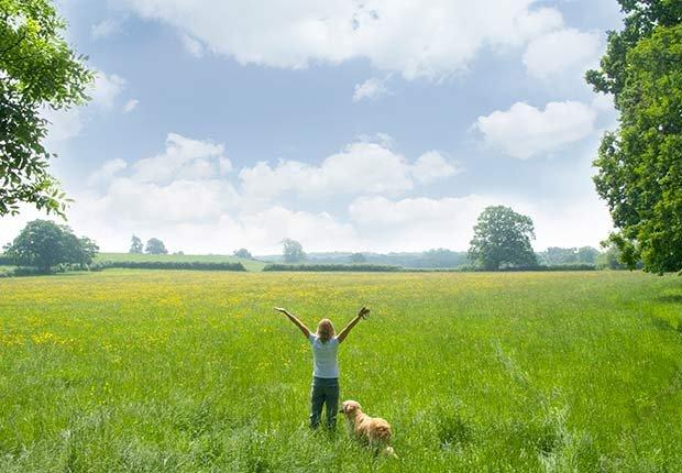 Fitness Flash High Intensity Training Health Benefits More Energy Field Dog ESP