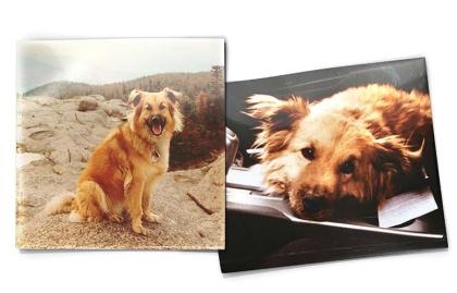 Perro Foghat a la edad de un año y a los 18 - Los perros y el envejecimiento