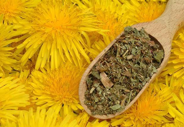 Un cucharón de madera con diente de león - Hierbas y especias podrían equilibrar las hormonas
