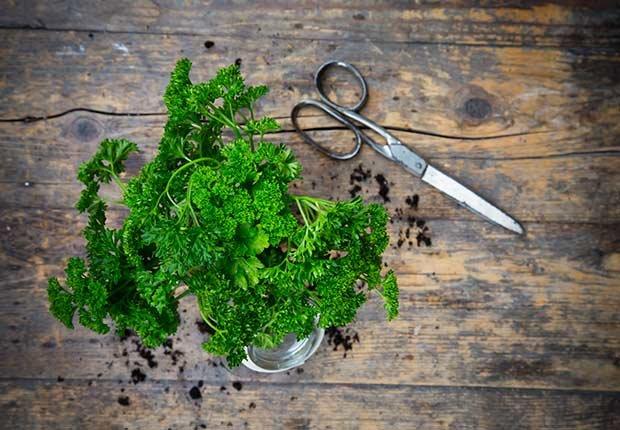 Perejil fresco sobre una mesa - Hierbas y especias podrían equilibrar las hormonas