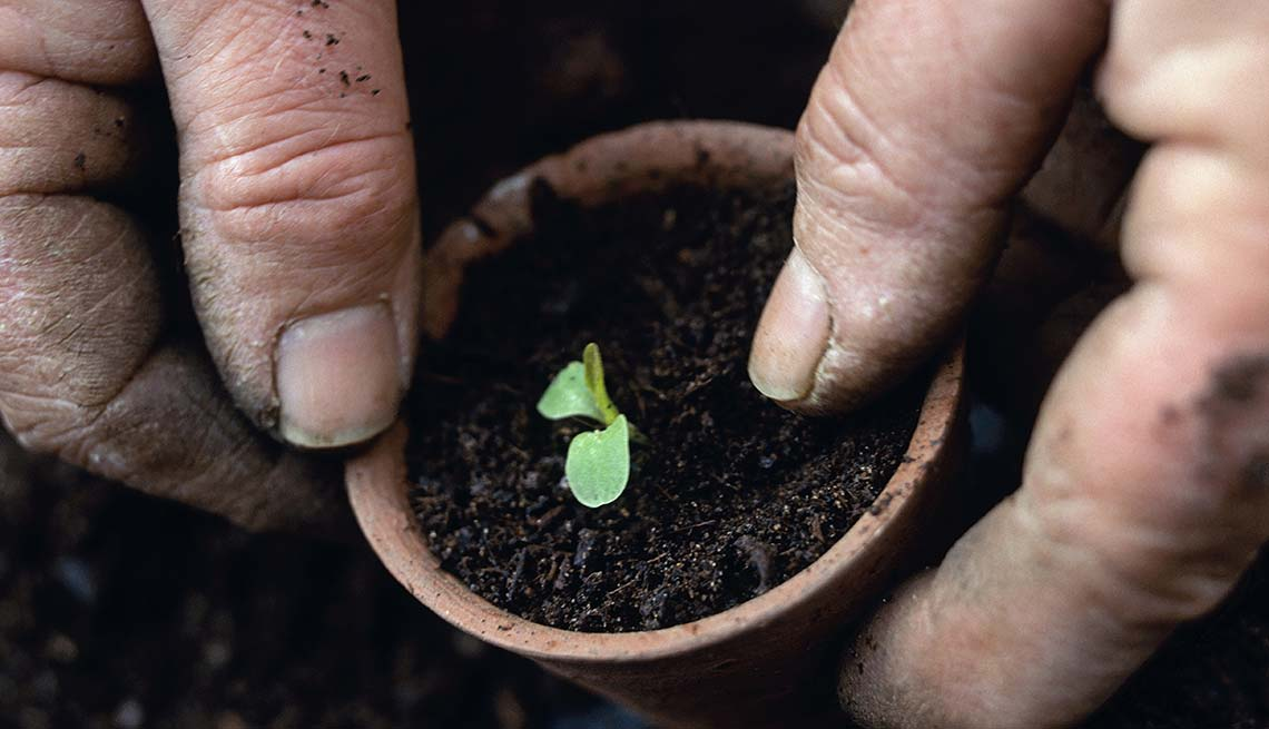 Dirty hands pot small plant, Reduce Stress