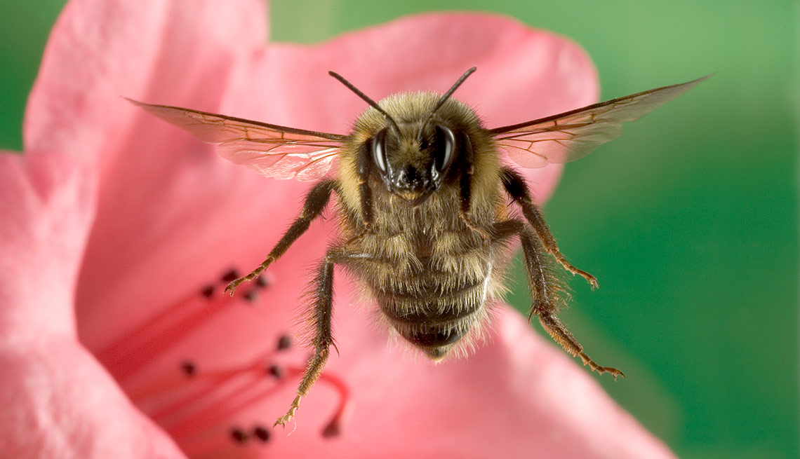 Bee flower closeup, Summer Survival Guide, Bee Sting