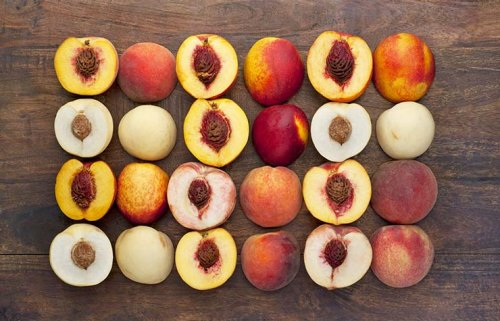 Peaches Quiz Fruit Fresh