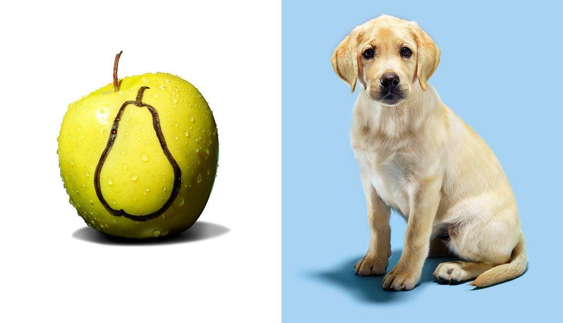 Imagen dividida, una fruta a un lado, un perro al otro