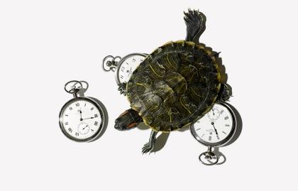 Tortuga y tres relojes