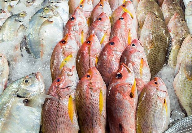 Variedad de pescado fresco